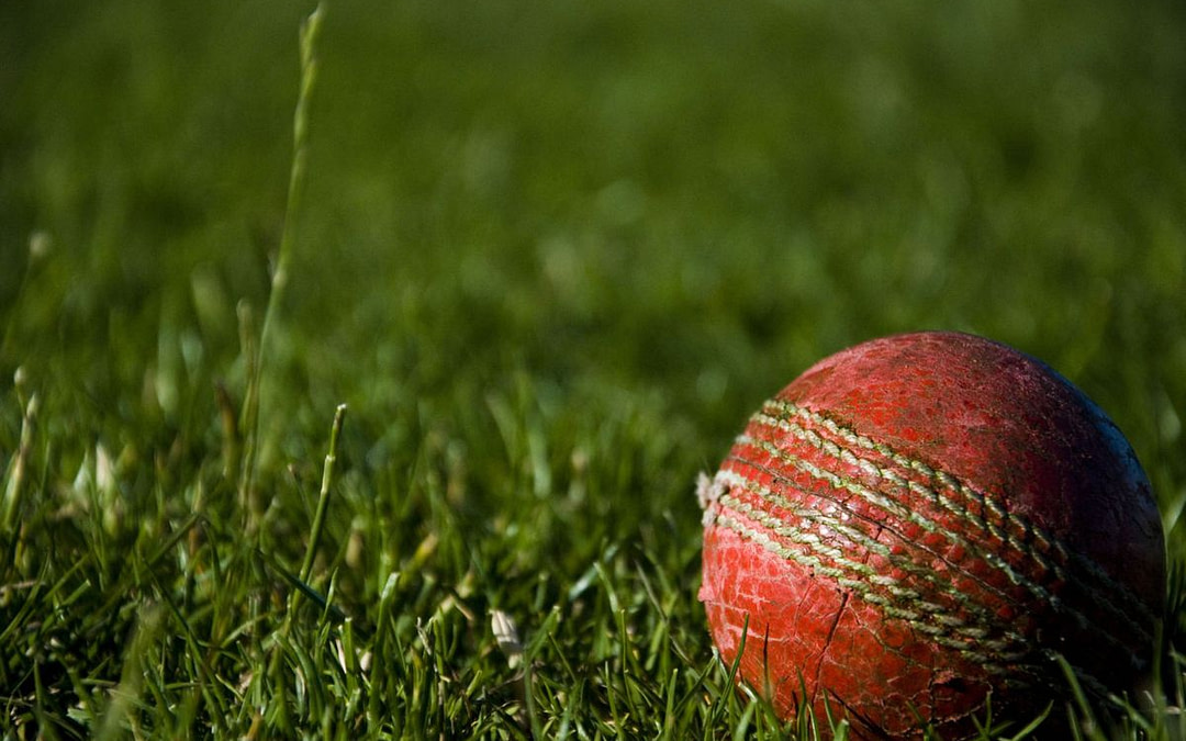 #STOP FAFFING ABOUT – PROTEAS!