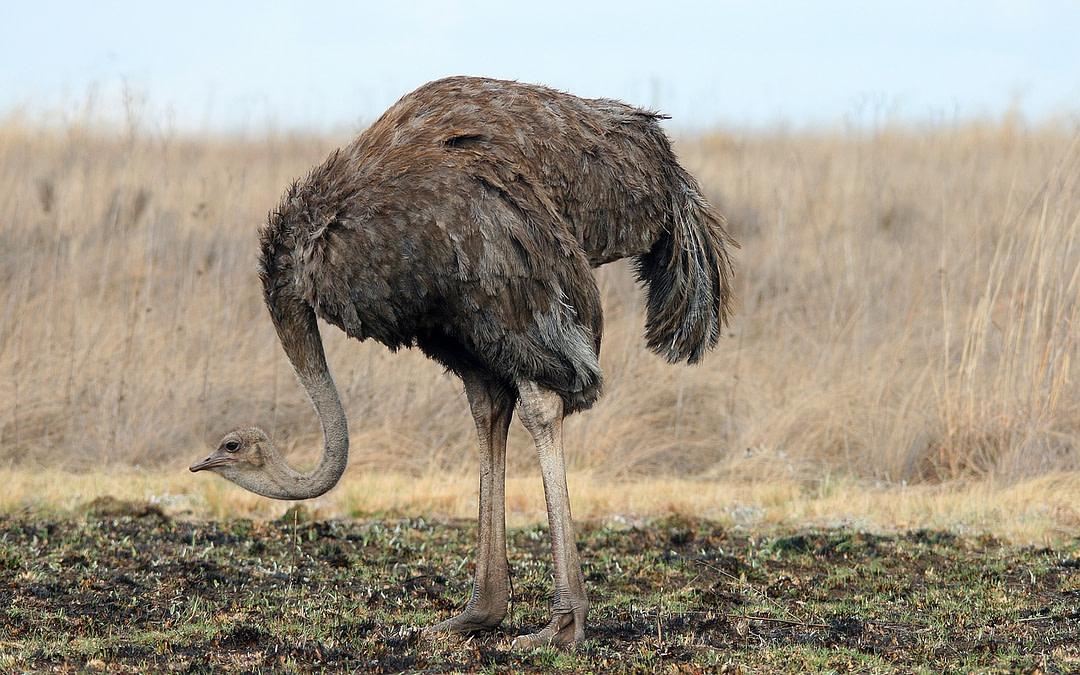 #Ostriches Beware! – The Digital Imperative!